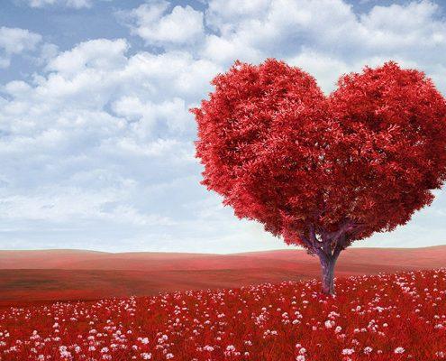 apprecier-les-veritables-tresors-de-la-vie-apprendre-aimer-image